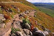 ロッキー山脈の野草