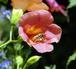 この花・何の花・気になる花