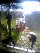 熱帯魚の観察