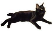 黒猫ひじき