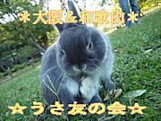 *大阪&和歌山*☆うさ友の会☆