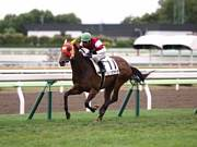 ホッコータルマエ競争馬