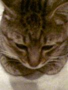 奇跡を起こす猫その名もミカン