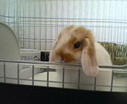 大分県のウサギ好きさん