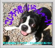 こじろう君☆いらっしゃ〜い@DOG