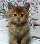 ペットの名前がディズニーキャラ