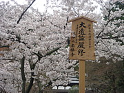 京都が好きです!