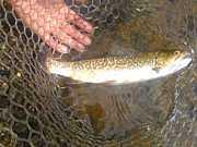 FishingKnot