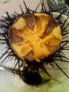 みろく横丁 DON〜絶品魚貝類