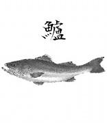 シーバス釣りin神奈川