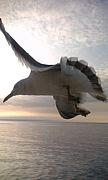 勇気の翼をいっぱいに拡げて。
