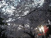 ☆皆楽種木☆