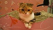 猫カフェねこのて★ファンの集い