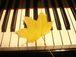 ピアノ弾きの手