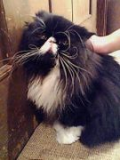 『猫神家の一族』