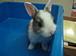 ウサギが大好き