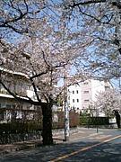 \桜高60期/