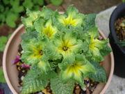 緑色の花が好き!