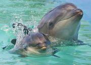 ホルフィン(イルカ&クジラ)