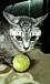 テニスサークル☆POM☆