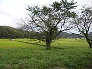 宮本 和樹