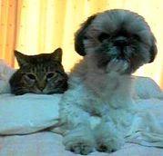 ネコ顔イヌ性格