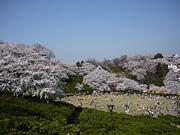 福井県鯖江市西山公園