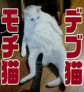 ♪デブ猫・モチ猫も大好き♪
