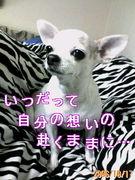 † 投げ矢り☆倶楽部 †