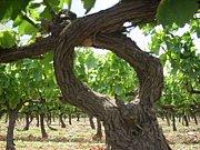 自然派ワインArtisans du vin