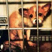 NO!! Animal Testing.〜経皮毒〜
