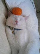 白猫ファン倶楽部♪