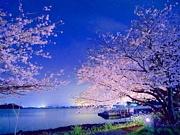jubeat チーム夜桜