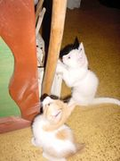 和歌山猫猫団
