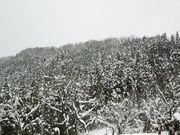 能登スノーボーダー