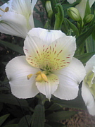 ★☆信州 片桐花卉園☆★
