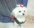東海の犬好き