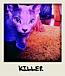 ����Killer����