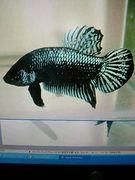 熱帯魚飼育講座、金魚、昆虫