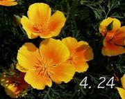 4月24日が記念日♪