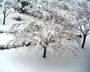 雪を見たい