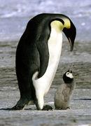 ペンギンが大好き