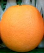 ★オレンジの会♪