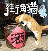 上海街角猫