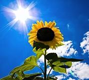 太陽が好き。