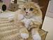 猫カフェ「ねこのひげ」