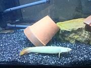 古代魚、熱帯魚ファンクラブ