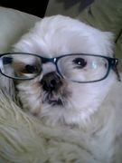エロくてボケてるメガネの人
