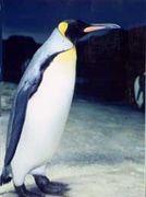 スイカップペンギン