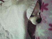 布団にもぐって寝る